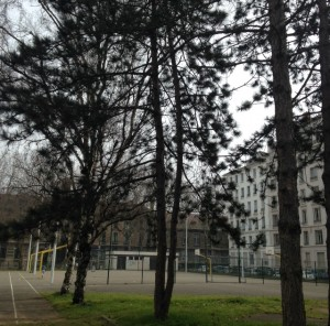 arbres stade 1