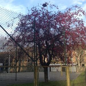 arbres stade mars 2016